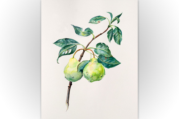 Branch With A Pear