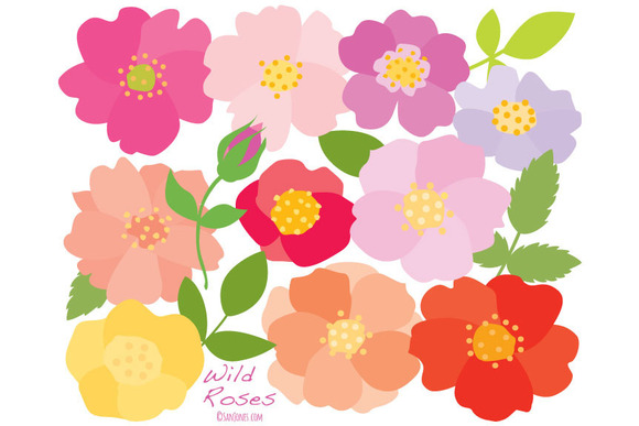 Quirky Wild Roses