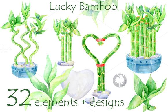 Lucky Bamboo Watercolor Clipart