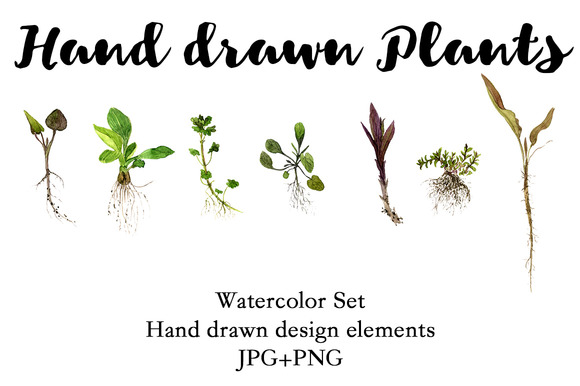 Hand Drawn Plants