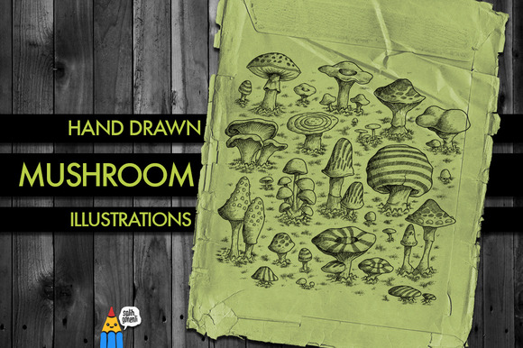Hand Drawn Mushroom Illustrations
