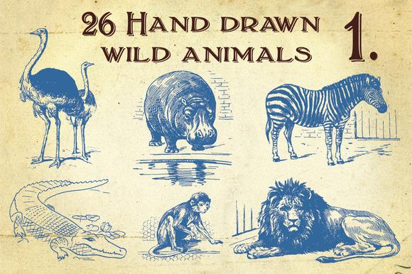 26 Hand Drawn Wild Animals