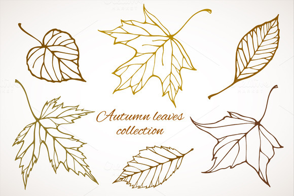 Fall Leaves Patterns Illustrations