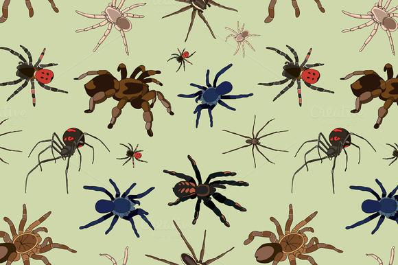 Spiders Vector Set Pattern