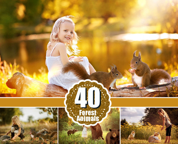 40 Different Forest Wild Animals Png