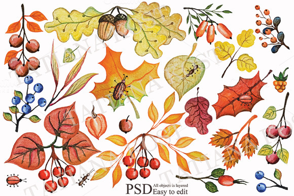 Autumn Leaves Berries Branches Set