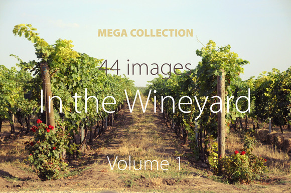 Vineyard Photoset Vol1 SAVE 80%