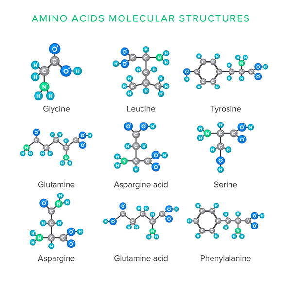 how to remember amino acid structures