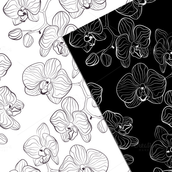Black And White Orchids