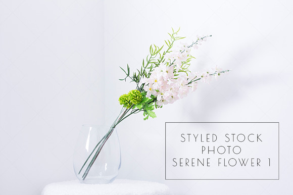 Styled Stock Photo Serene Flower 1