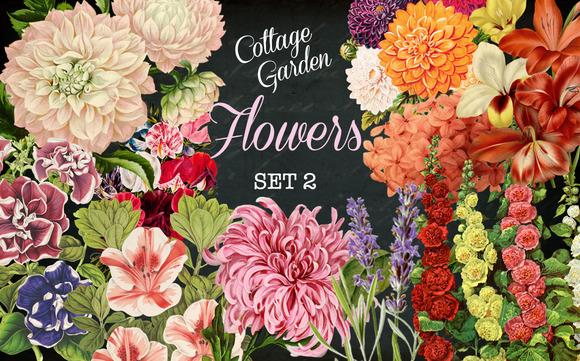 Cottage Garden Flowers Set 2