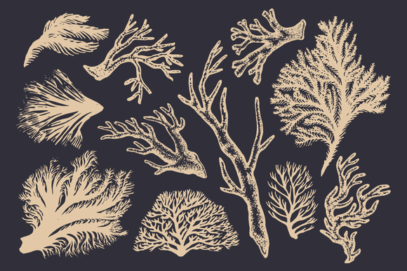 Coral Seaweed Drawings Patterns