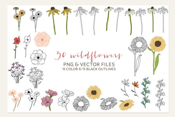 30 PNG Vector Wildflowers