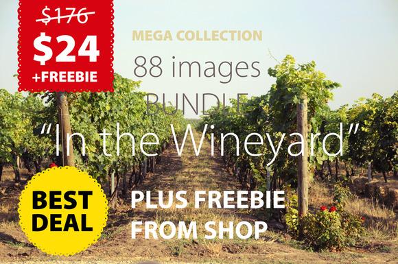 Vineyard BUNDLE FREE Product