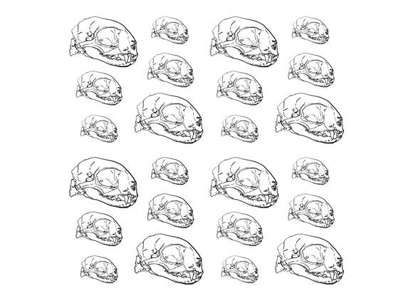 Seamless Pattern Of Animal Skull Bac
