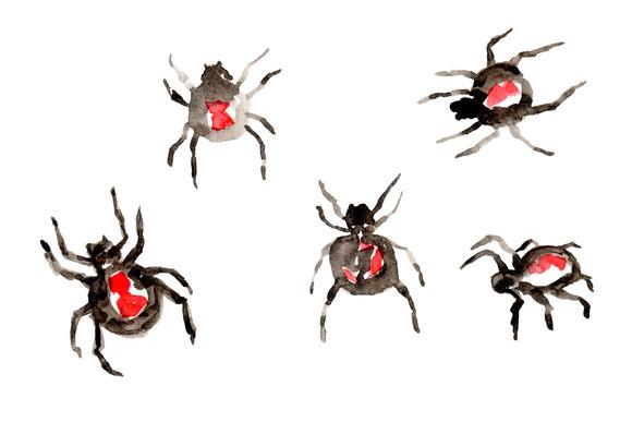 Watercolor Black Widow Spider