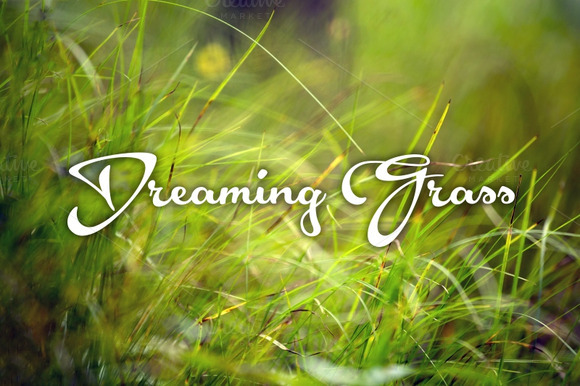 Dreaming Grass 8 Photoset