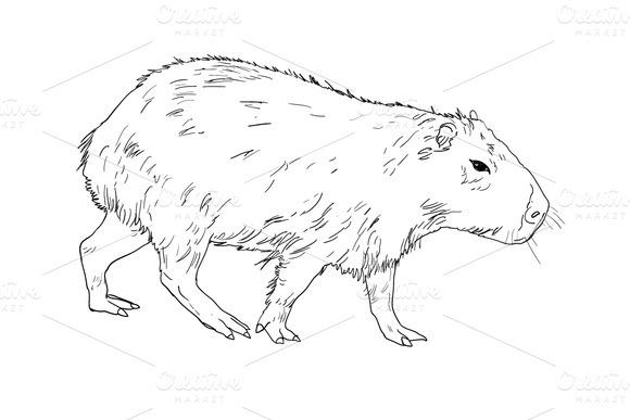 The Vector Of Capybara