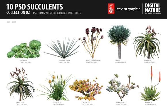 10 PSD Succulents Collection 2