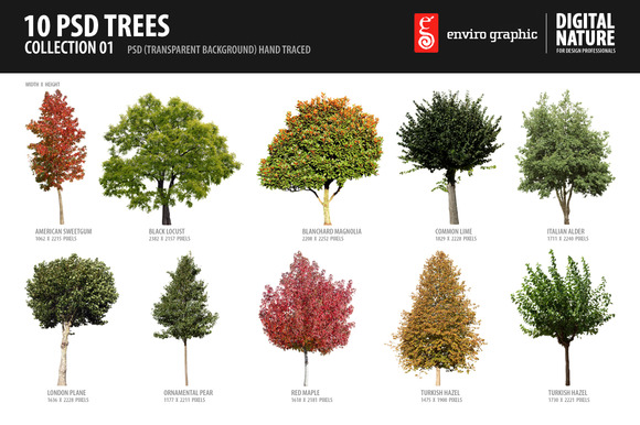 10 PSD Trees Collection 1