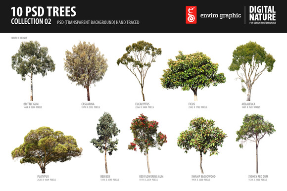 10 PSD Trees Collection 2
