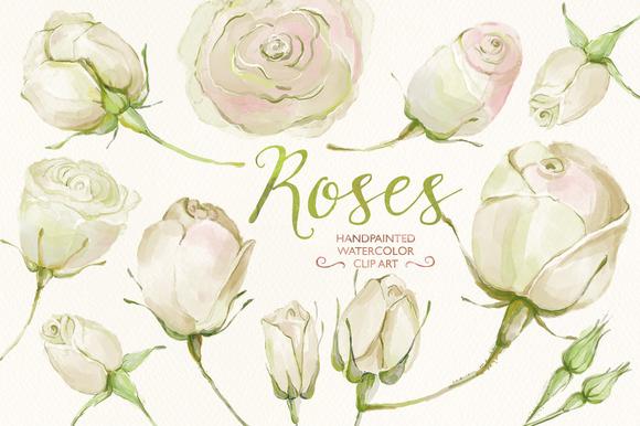 Watercolor Clip Art White Roses