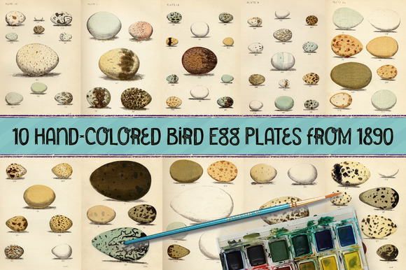 10 Hand-Colored Bird Egg Prints