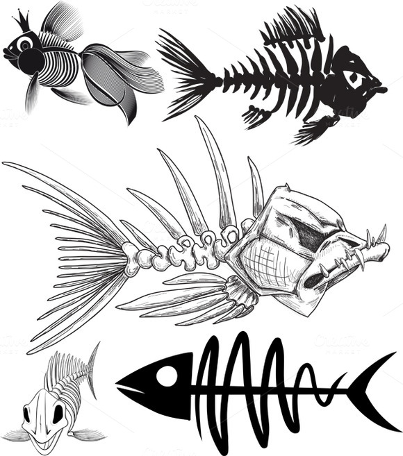 Skeleton Of Five Different Fish