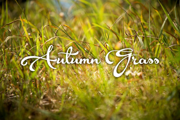 Autumn Grass 7 Photoset