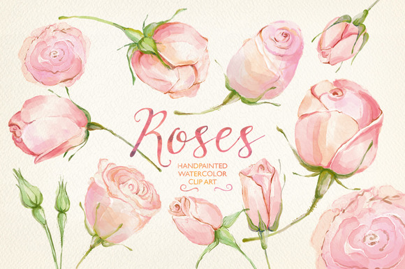 Watercolor Clip Art Cream Roses