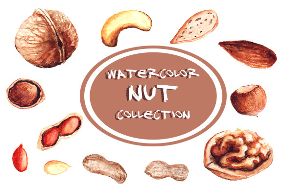 Watercolor Nuts Illustrations