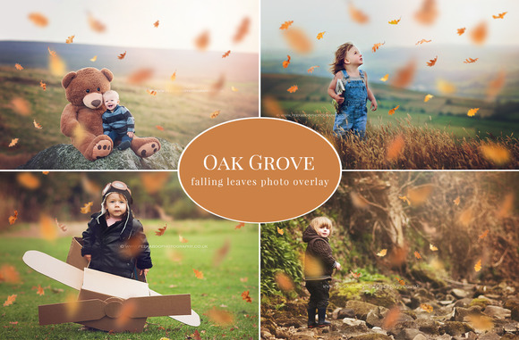 Oak Grove Falling Leaves Overlay
