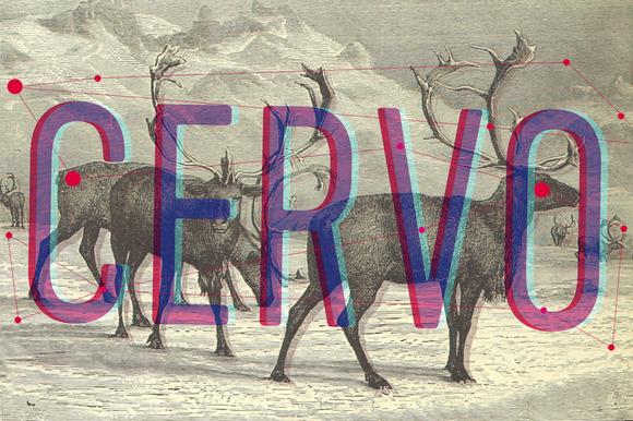 Cervo Family Fonts 50% Off