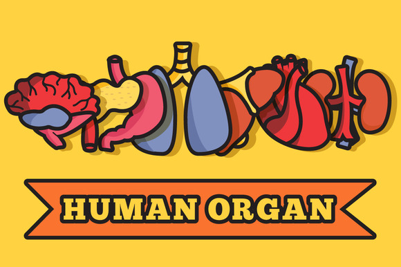 Human Organs Set Illustration Vector