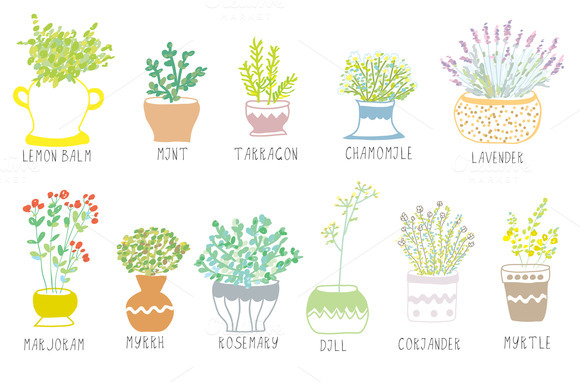 Medical And Culinary Herbs