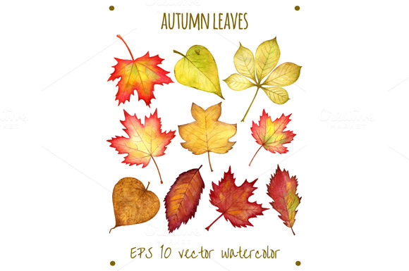 Autumn Leaves Watercolor In Vector