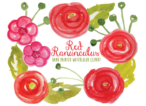 Watercolor Ranunculus