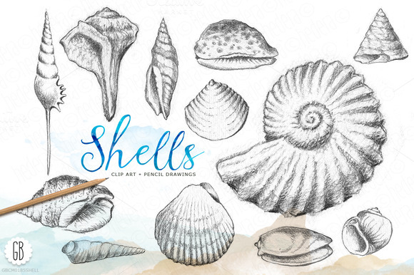 Shells Handdrawn Pencil