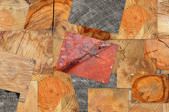 20 Tree End Textures