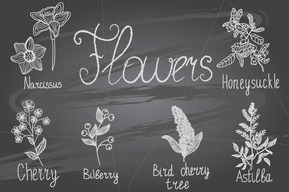 Sketches Of Flowers On Chalkboard