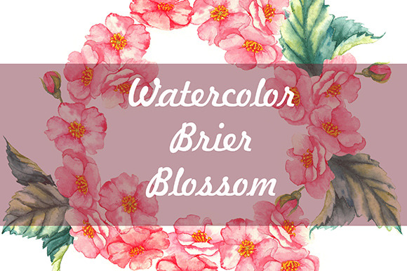 Watercolor Brier Flowers