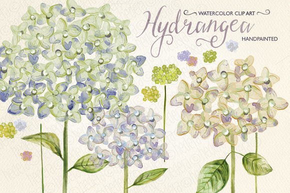 Watercolor Hydrangea Hand Painted