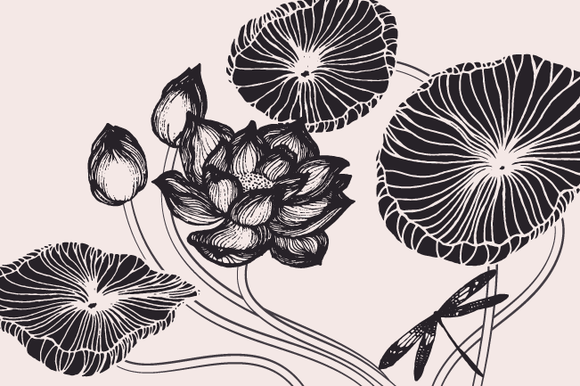 Lotus Flowers Leaves Drawings