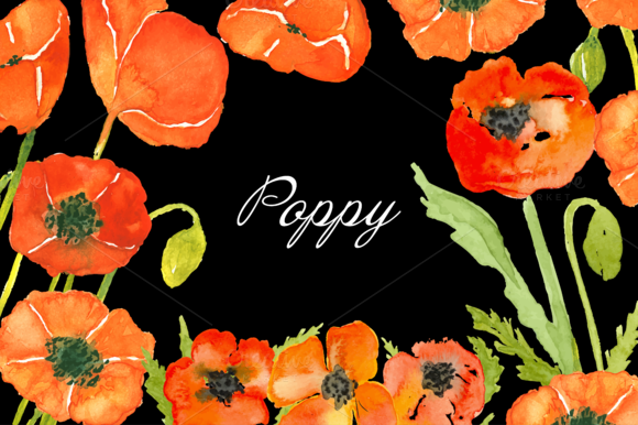 Hand Drawn Watercolor Painted Poppy