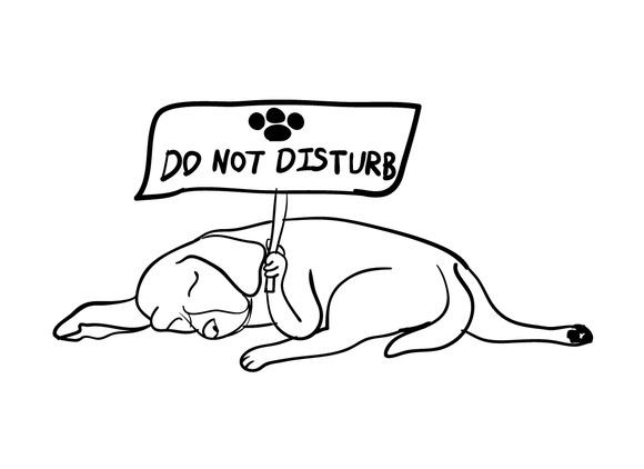 Sleeping Dog Holding Do Not Disturb