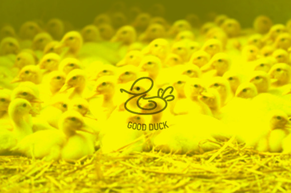 Logotype Good Duck