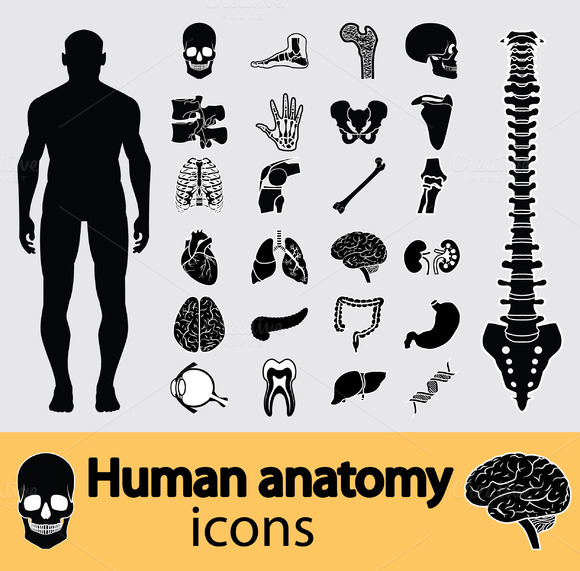 Human Anatomy Icons