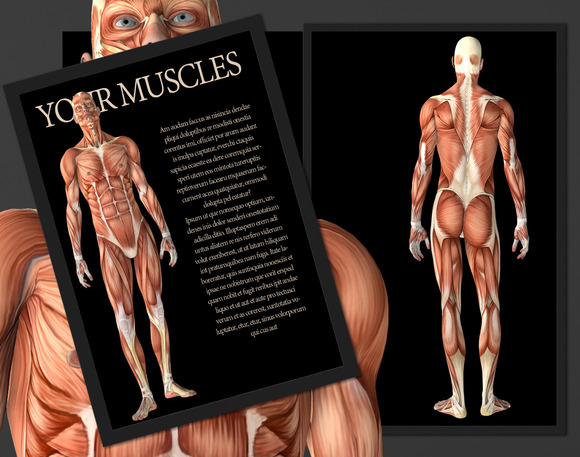 Your Body Muscle