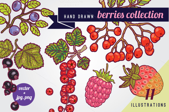 Hand Drawn Berries Illustrations
