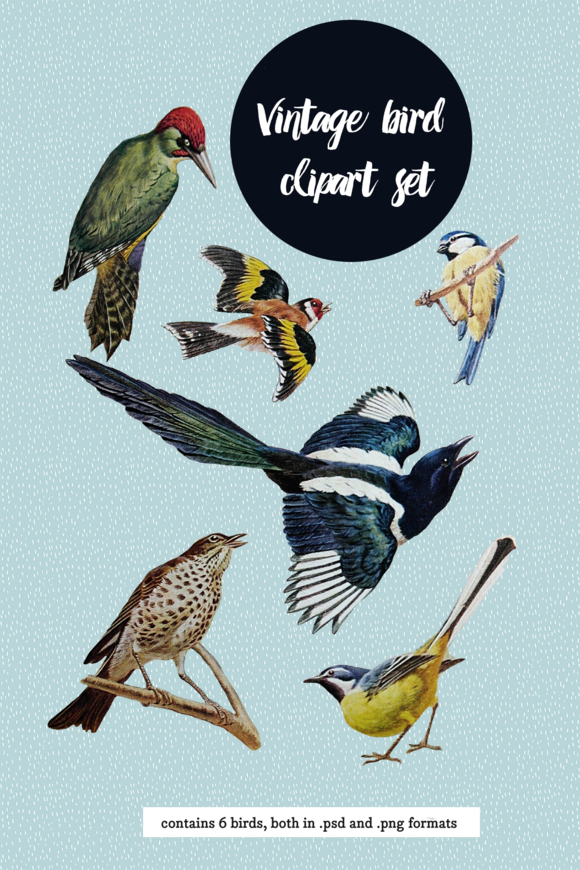 Vintage Birds Clipart Set